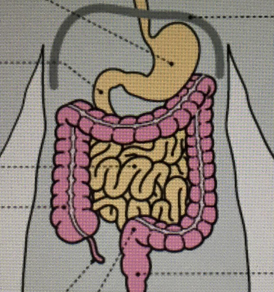 小腸内の免疫細胞を高めよう