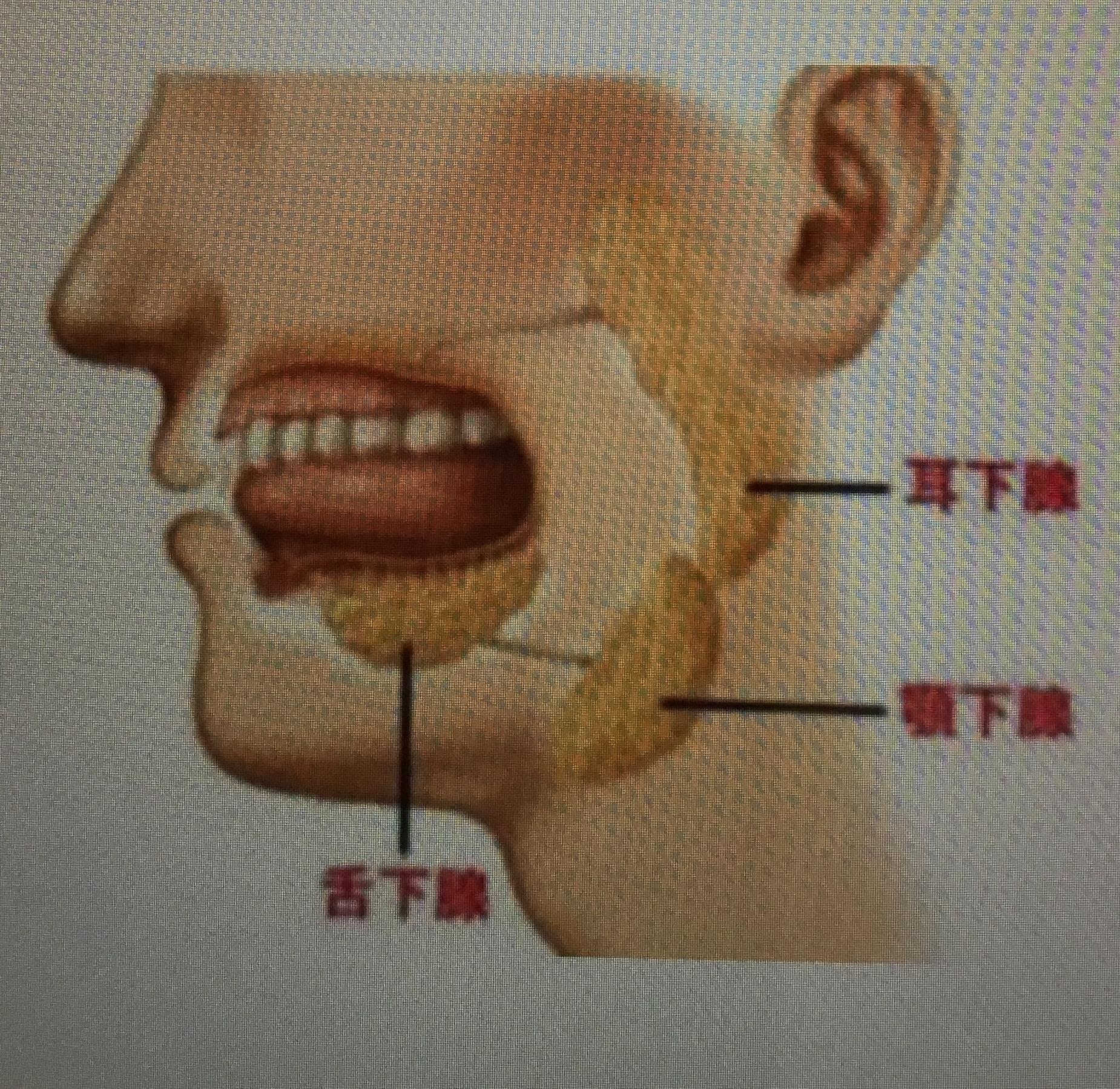 3つの唾液腺